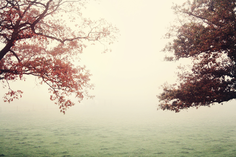 trees_and_fog_by_GoWithTheFlowEnzo.jpg