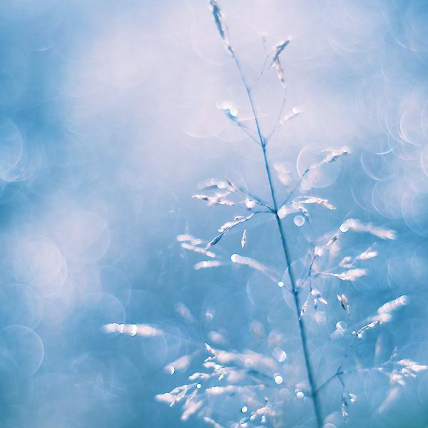 winter_by_Megson.jpg