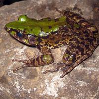 115 új fajt találtak