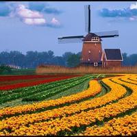 Ezért utáljuk Hollandiát