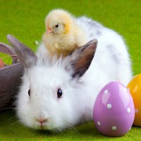 Húsvéti nyuszi, csibe: jogunkban áll panaszkodni?