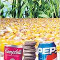 Gondolatok a törvénnyel diszkriminált cukorról