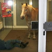 Ló a bankban