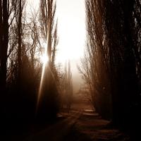 Ködös adventi vasárnap