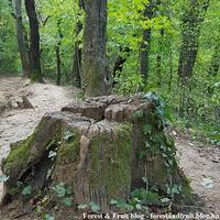 Mohák, az erdő sokoldalú telepesei