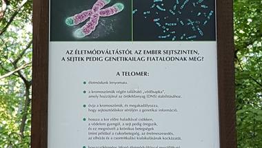 Telomerek titka