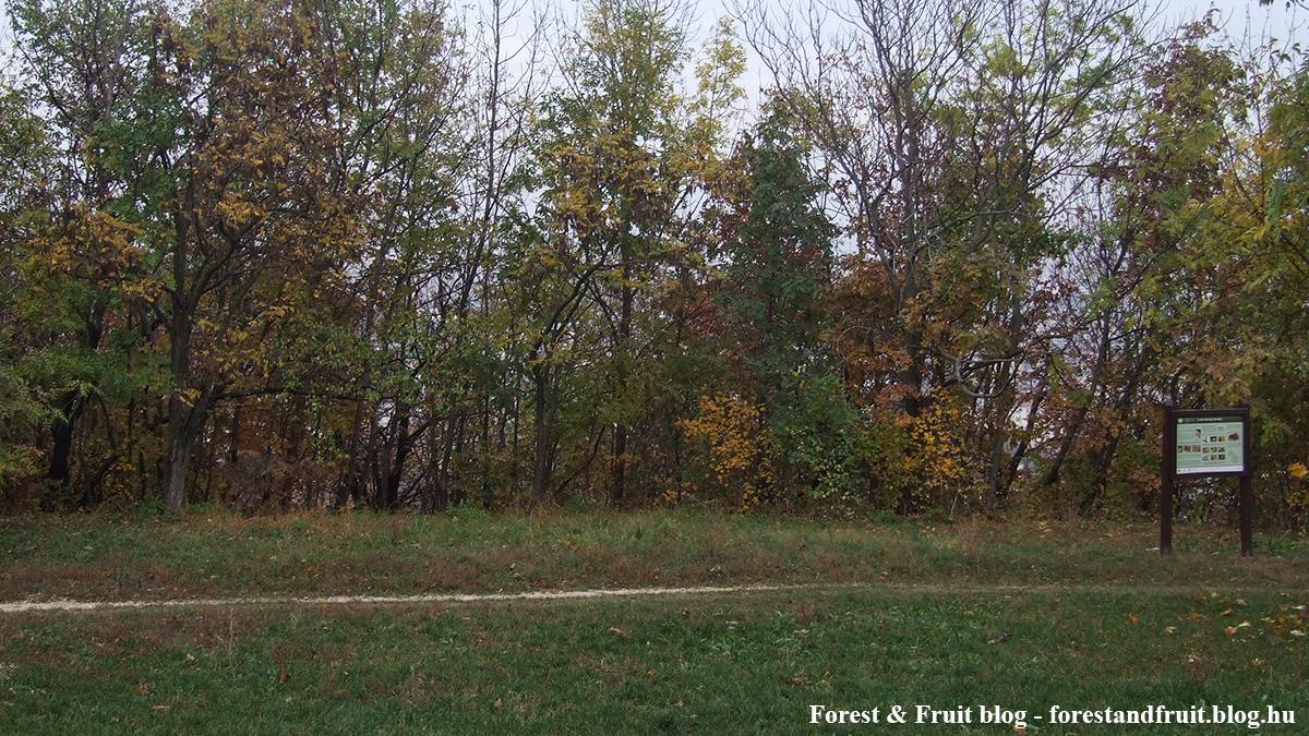 Kilátás az 1. táblától ősszel