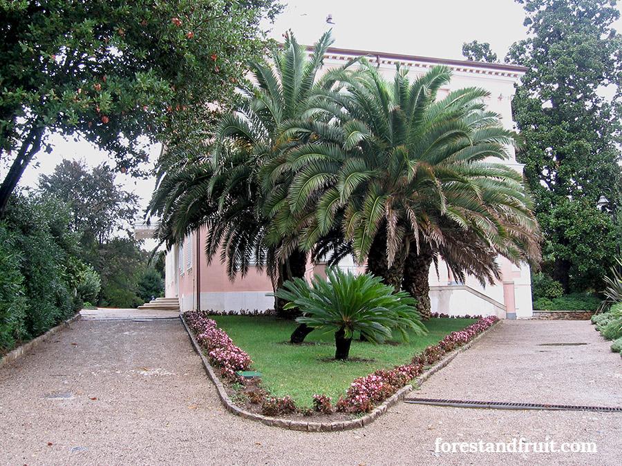 Villa Angolina