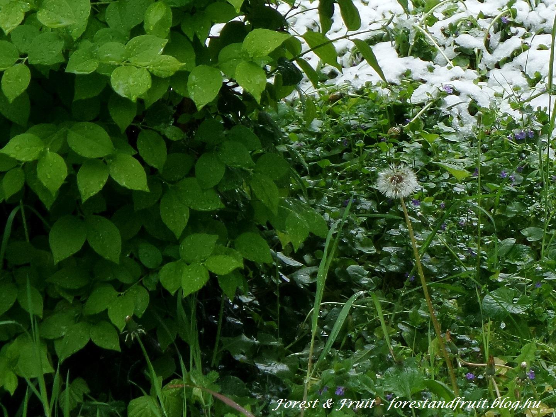 forestandfruit_170419-14401080.jpg
