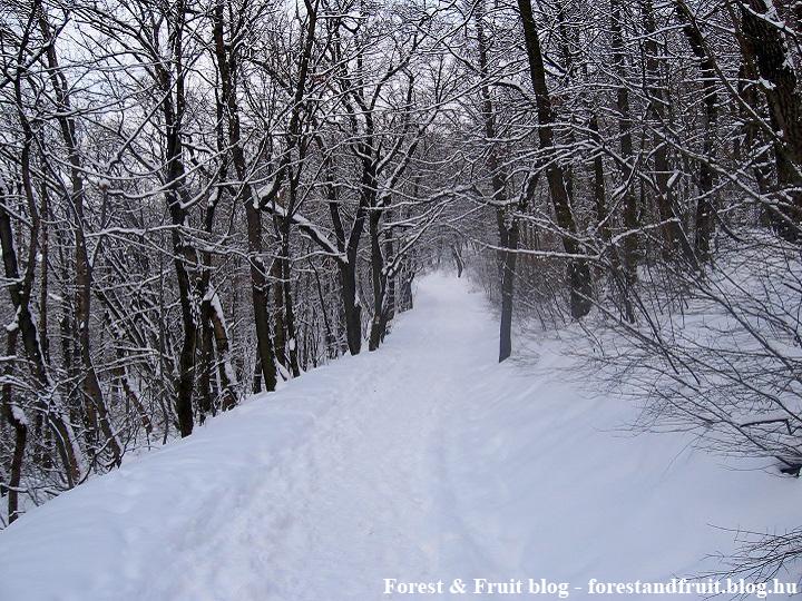 2010. február - Hárs-hegy