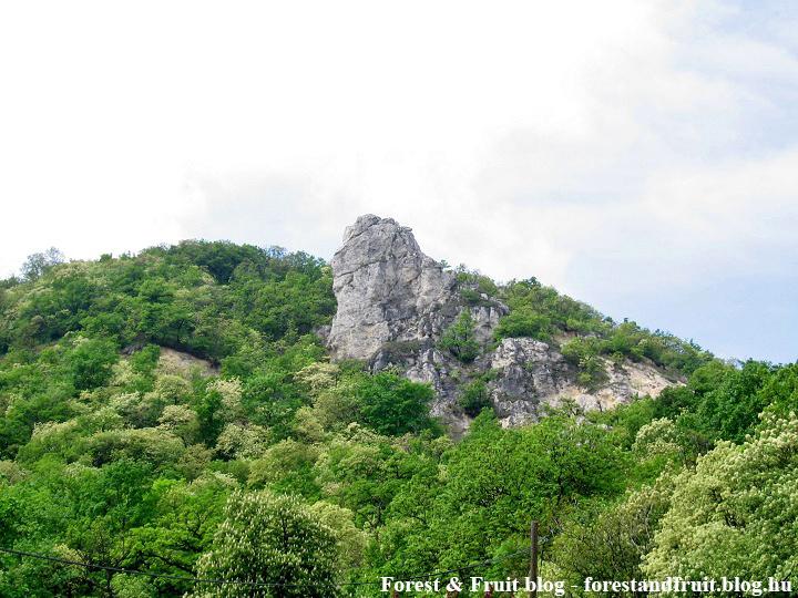 2010. május - Zugliget, Tündér-szikla