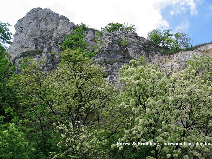 2016. május - Zugliget, Tündér-szikla