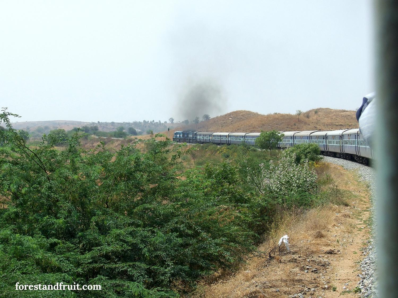 indiamosolya01.jpg