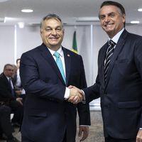 Hacsek Brazíliában
