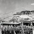 Tibet szabadsága
