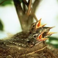 Szórólapok, madarak