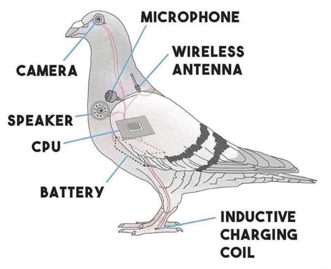 bird_as_drone.jpg