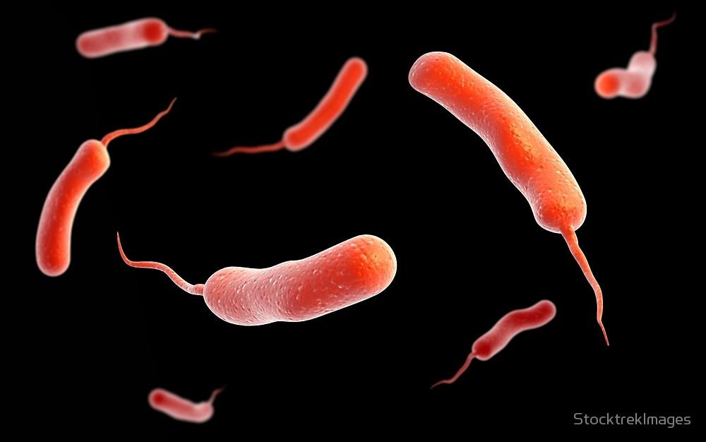 kolerabakterium.jpg