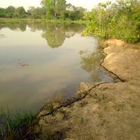 4. Hangyából elefántot - Nyugat-Afrika természetjáróknak I.