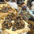 1, Patkányragu és fokhagymás lángos: Nyugat-Afrika gasztrobloggereknek - I..