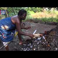 13. Csirkeáldozat Dankoli fájánál - ahol a vudu nemzeti vallás II.