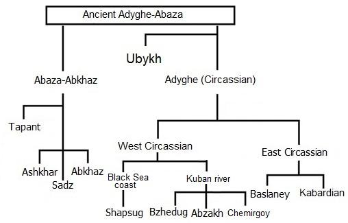 northwest_caucasian_family_tree.jpg