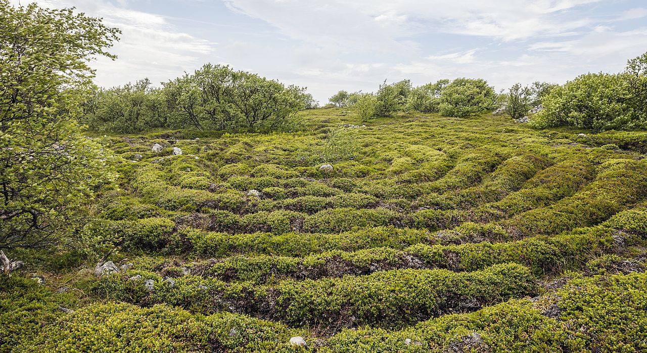 _rus-2016-bolshoi_zayatsky_island-stone_labyrinth_03.jpg