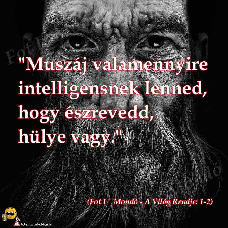 vilag_rendje_1-2_hatter_spec.jpg