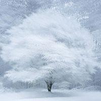 Látogatható az Év természetfotósa fotókiállítás