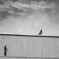Képeken a debreceni toronyház