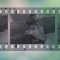 Rosszabb a film nyersanyag képminősége, mint a digitális gép által készített képnek?