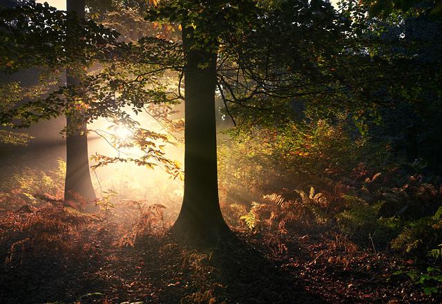 Autumn-3.jpg