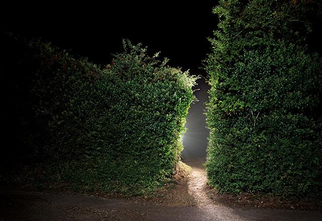 hedge-lastest.jpg