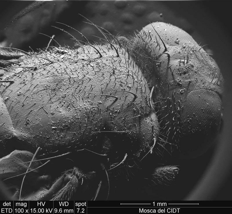 fly-under-microscope-ivan-jimenez-boone.jpg