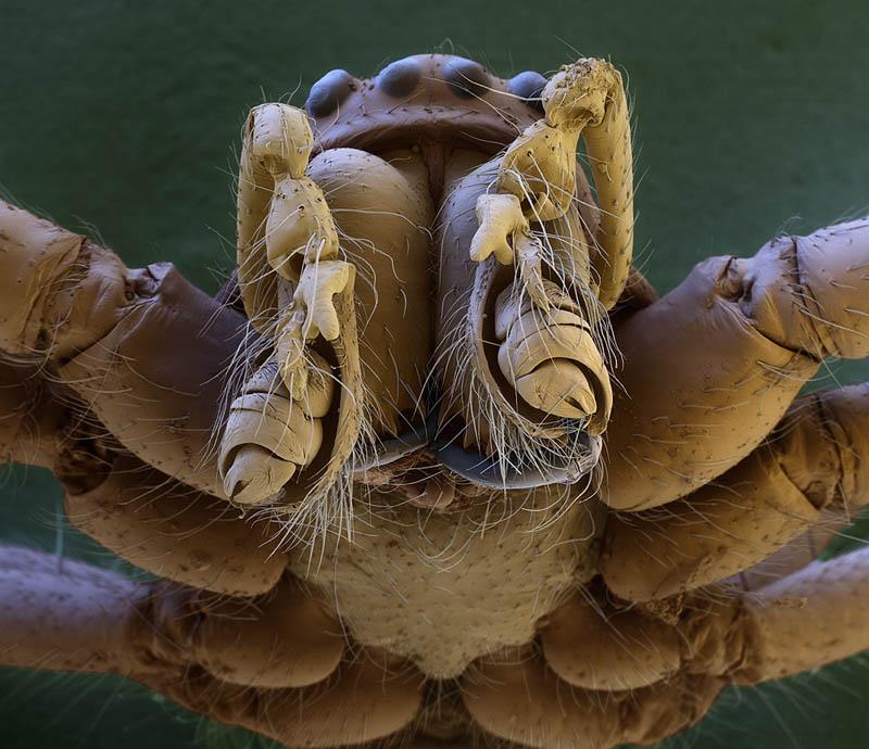 macro-spider-head-electron-microscope-oliver-meckes.jpg
