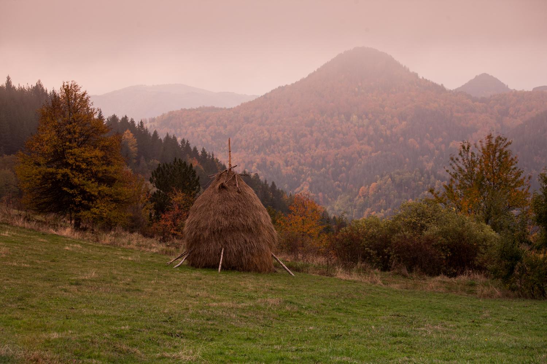 serbia-tara120151022-23.jpg