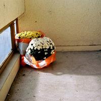 novemberi virágok