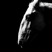 Szerelmes lovak, magányos gépmadarak