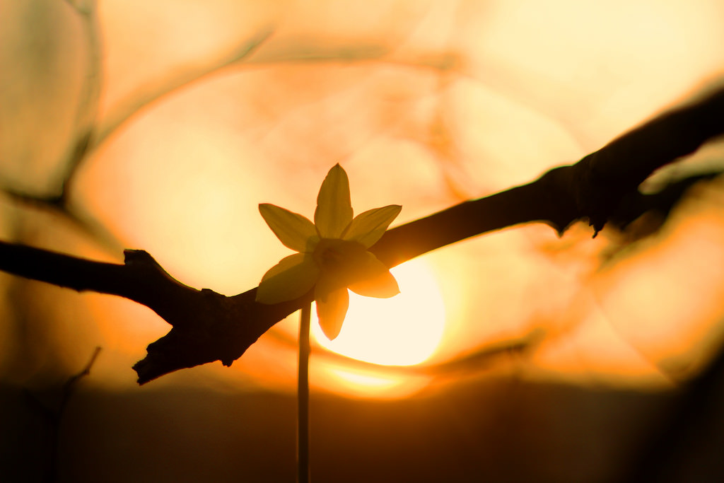 7-tipp-tavaszi-fotokhoz-8.jpg