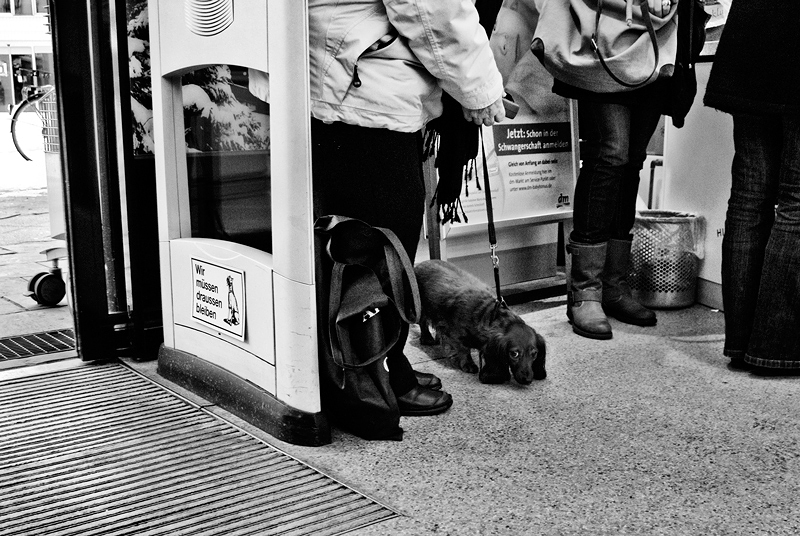 roman-tripler-kutya-15.jpg