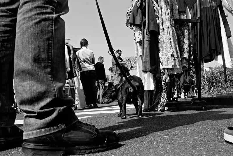 roman-tripler-kutya-3.jpg