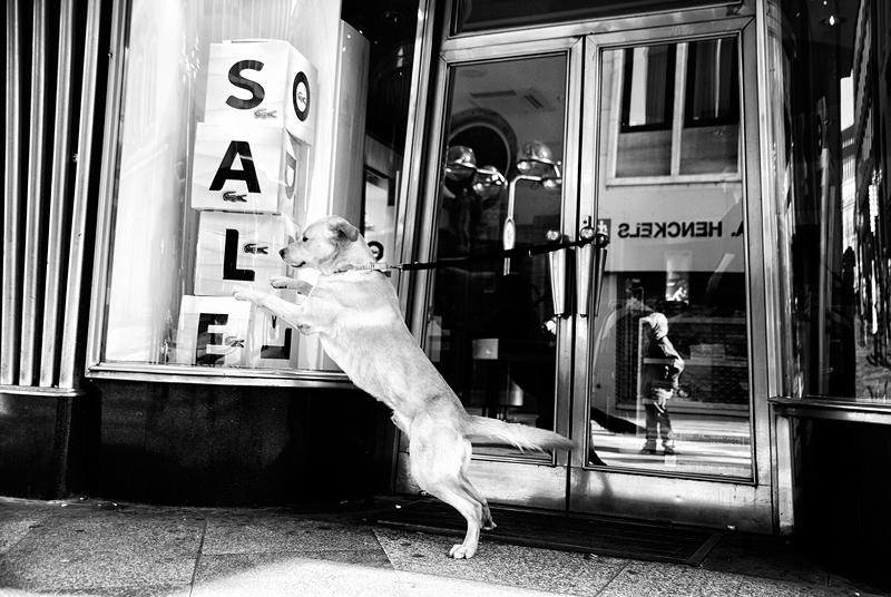 roman-tripler-kutya-6.jpg