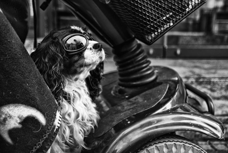 roman-tripler-kutya-7.jpg