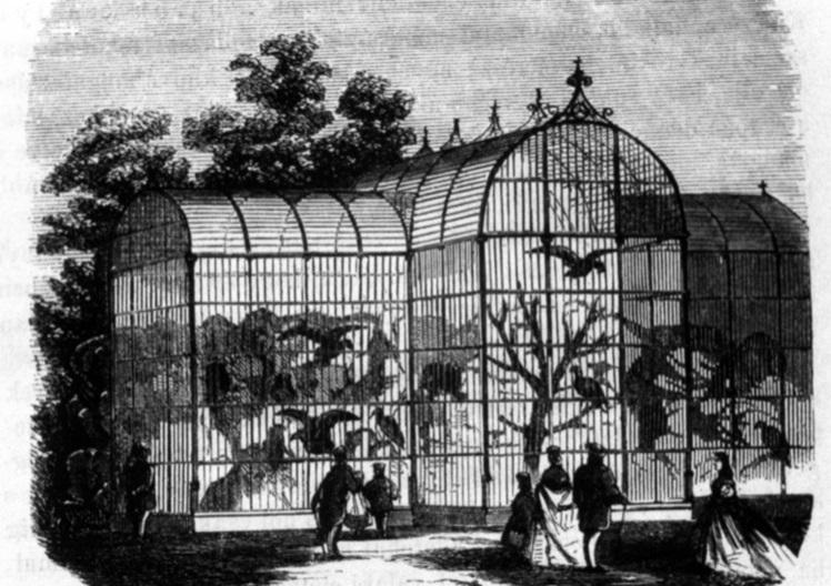 Orvmadarak és ragadozó madarak röpdéje, 1866