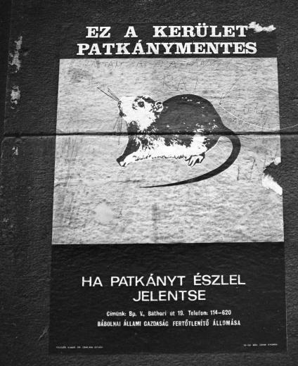 patkanymentes-1970esevek-fortepan_hu-15891.jpg