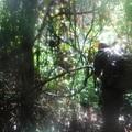 111. - Visszatérés Guyanára