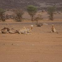 127. - Sivatagi szívatások