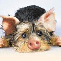 Der Schweinehund, avagy a  bennünk lakó Diszneb meséje