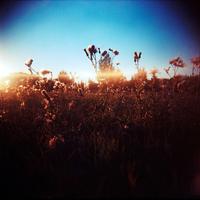 Flickr: plain of light
