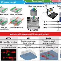 Bionyomtatással készült modellek komolyan segítik a rákkutatást